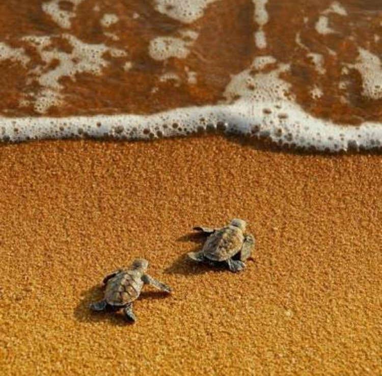 Babies on a Beach